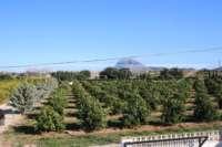 Finca a poca distancia del centro de Ondara y con preciosas vistas a las montañas - Campos de naranjos