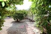 Modernisierungsbedürftige Villa nur 400 m vom Meer in Els Poblets - Obstbäume